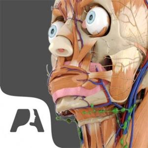 Pocket Anatomy image not available